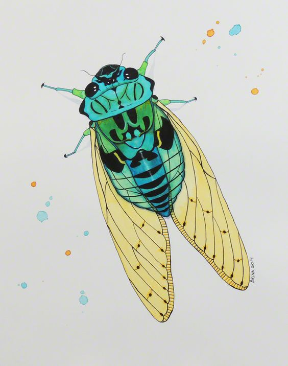 Cicada - Watercolor India Ink by Brina Beury