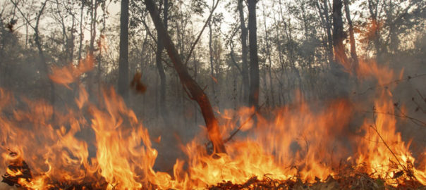 FOREST GUARD LOSES LIFE TO FIRE IN BANDIPUR