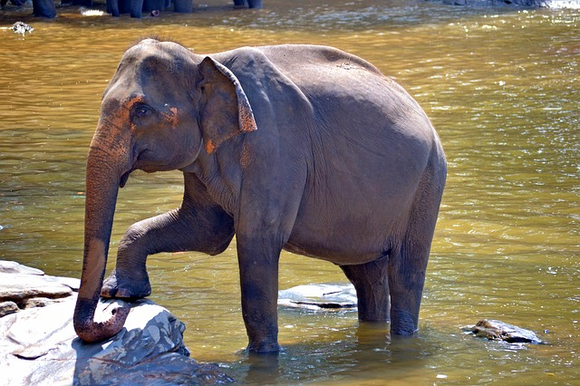pegnent-elephant-266063_640