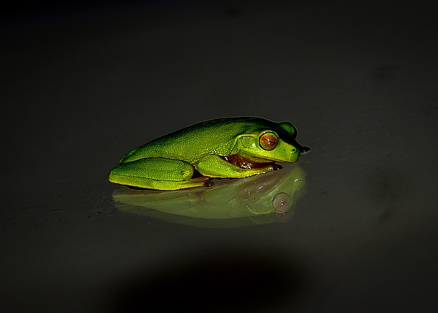 FROGS HAVE THE UNIQUE ABILITY TO SEE COLOURS IN EXTREME DARKNESS