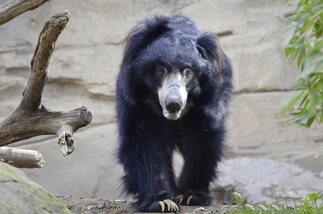 sloth-1341164_640