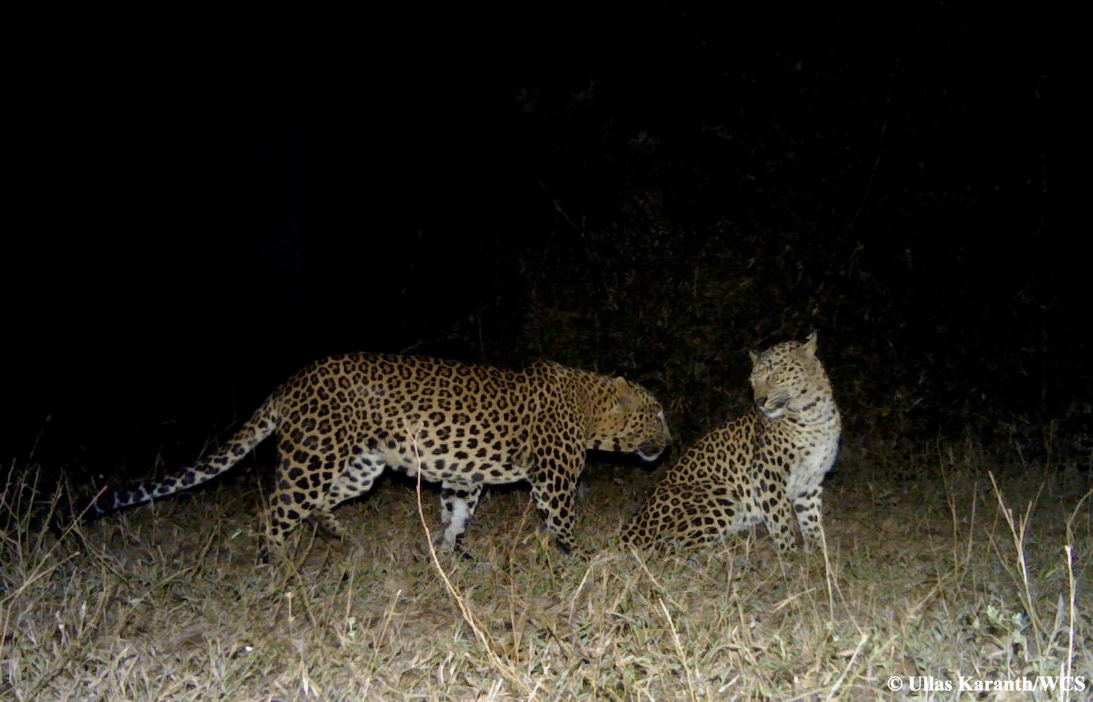 10 Amazing Wildlife Moments Caught On Camera Traps India